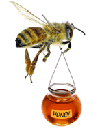 Manuka Honey bee